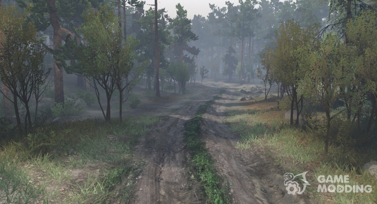 Mud texture and forest roads