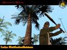"Бита ""Жёлтого пса"" для GTA San Andreas вид сзади слева"