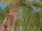 Пальмы из Crysis