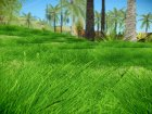 Super Realistic Grass