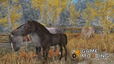 Foals of Skyrim for TES V Skyrim