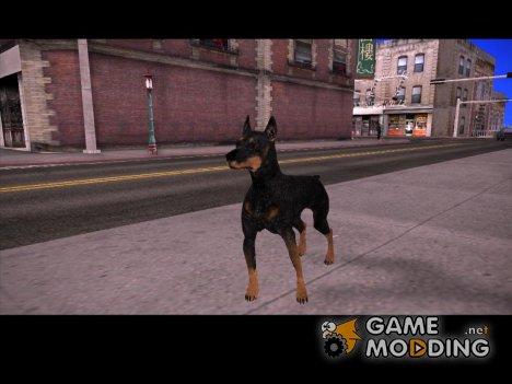 Доберман for GTA San Andreas