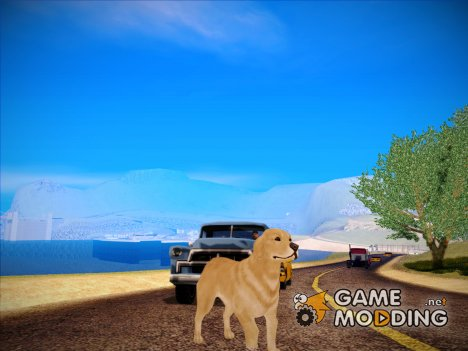 Golden Retriever (Alan Wake) для GTA San Andreas