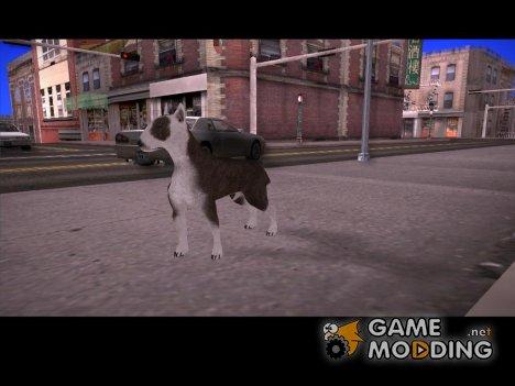 Бультерьер for GTA San Andreas